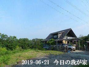 2019-06・21 今日の里山模様・・・ (1).JPG