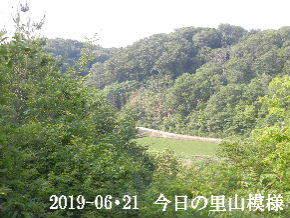 2019-06・21 今日の里山模様・・・ (3).JPG
