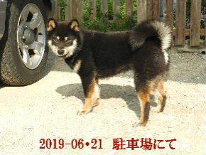2019-06・21 今日の麻呂 (7).JPG