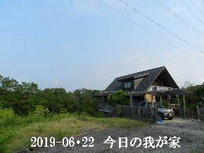 2019-06・22 今日の里山模様・・・ (1).JPG