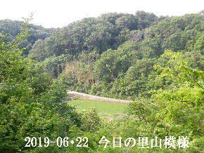 2019-06・22 今日の里山模様・・・ (3).JPG