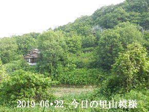 2019-06・22 今日の里山模様・・・ (4).JPG