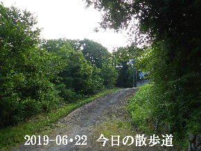 2019-06・22 今日の里山模様・・・ (5).JPG