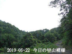 2019-06・22 今日の里山模様・・・ (6).JPG