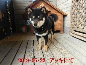 2019-06・22 今日の麻呂 (1).JPG
