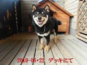 2019-06・22 今日の麻呂 (2).JPG