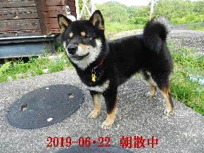 2019-06・22 今日の麻呂 (4).JPG