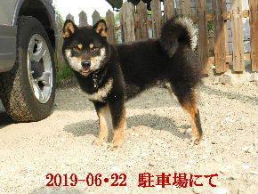 2019-06・22 今日の麻呂 (5).JPG