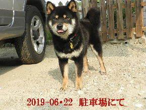 2019-06・22 今日の麻呂 (6).JPG