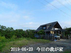 2019-06・23 今日の里山模様・・・ (1).JPG