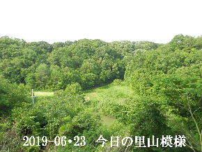2019-06・23 今日の里山模様・・・ (3).JPG