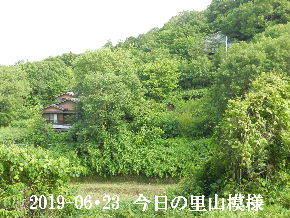 2019-06・23 今日の里山模様・・・ (5).JPG