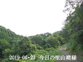 2019-06・23 今日の里山模様・・・ (6).JPG