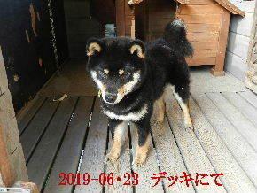 2019-06・23 今日の麻呂 (2).JPG
