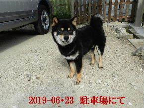 2019-06・23 今日の麻呂 (6).JPG