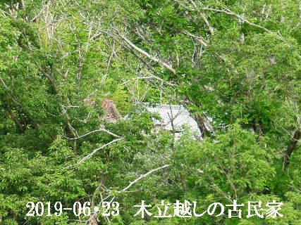 2019-06・23 木立越しの古民家.JPG