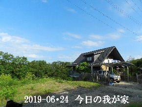 2019-06・24 今日の里山模様・・・ (1).JPG