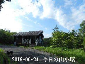 2019-06・24 今日の里山模様・・・ (2).JPG