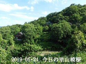2019-06・24 今日の里山模様・・・ (4).JPG