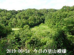 2019-06・24 今日の里山模様・・・ (5).JPG