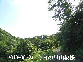 2019-06・24 今日の里山模様・・・ (6).JPG