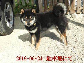 2019-06・24 今日の麻呂 (6).JPG
