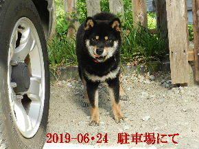 2019-06・24 今日の麻呂 (7).JPG