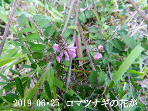 2019-06・25 今日の出遭い・・・ (1).JPG