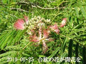 2019-06・25 今日の出遭い・・・ (10).JPG