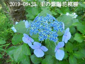 2019-06・25 今日の出遭い・・・ (11).JPG