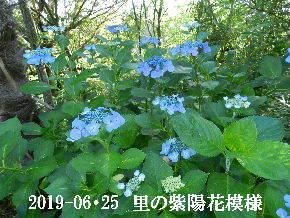 2019-06・25 今日の出遭い・・・ (12).JPG