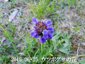 2019-06・25 今日の出遭い・・・ (2).JPG