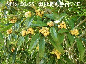 2019-06・25 今日の出遭い・・・ (4).JPG