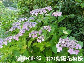 2019-06・25 今日の出遭い・・・ (9).JPG