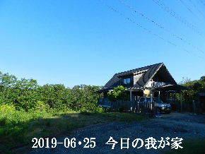 2019-06・25 今日の里山模様・・・ (1).JPG