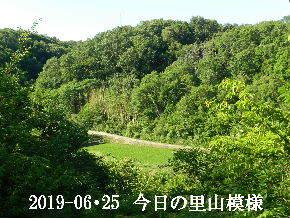 2019-06・25 今日の里山模様・・・ (3).JPG