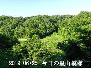 2019-06・25 今日の里山模様・・・ (5).JPG