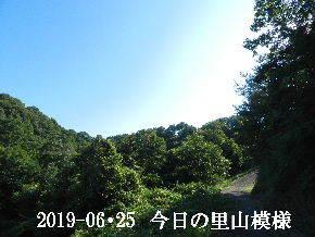 2019-06・25 今日の里山模様・・・ (6).JPG