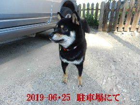 2019-06・25 今日の麻呂 (4).JPG