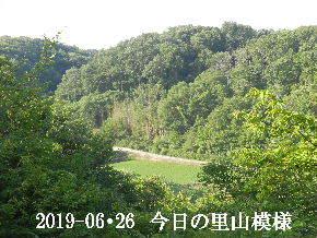 2019-06・26 今日の里山模様・・・ (3).JPG