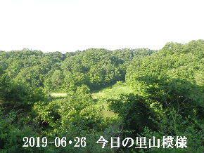 2019-06・26 今日の里山模様・・・ (5).JPG