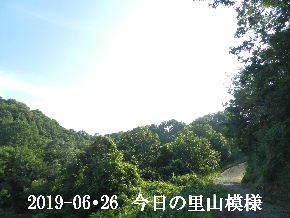 2019-06・26 今日の里山模様・・・ (6).JPG
