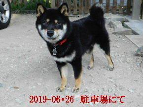 2019-06・26 今日の麻呂 (3).JPG