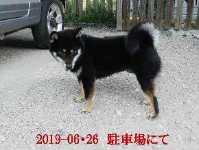 2019-06・26 今日の麻呂 (4).JPG