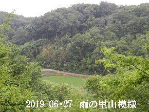 2019-06・27 今日の里山模様・・・ (3).JPG