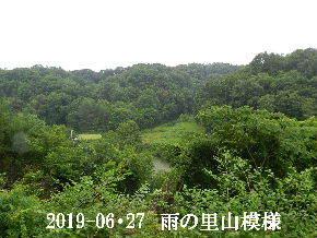 2019-06・27 今日の里山模様・・・ (5).JPG