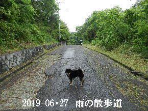 2019-06・27 今日の里山模様・・・ (6).JPG