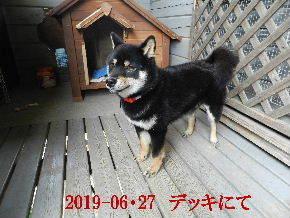 2019-06・27 今日の麻呂 (2).JPG