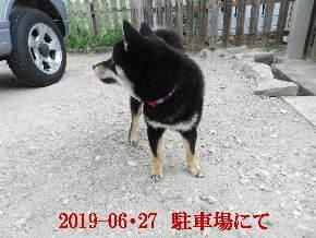 2019-06・27 今日の麻呂 (3).JPG