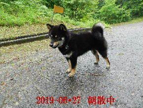 2019-06・27 今日の麻呂 (6).JPG